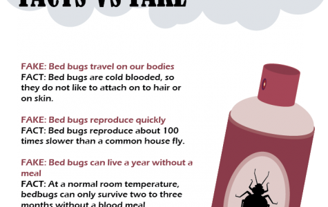 Recent 'Bed Bug Incident' provokes unnecessary panic