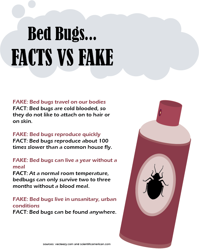 Recent+%27Bed+Bug+Incident%27+provokes+unnecessary+panic%C2%A0
